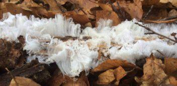 vochtregulerende verf hout beschermen tegen vocht