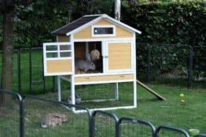 konijnenhok verven