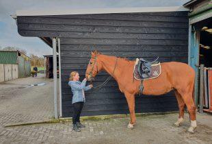 paardenstal verven houten paardenstal schilderen